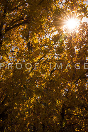 Sunbeams in Fall 2